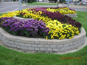 One of many Medicine Hat 'Flower Beds'